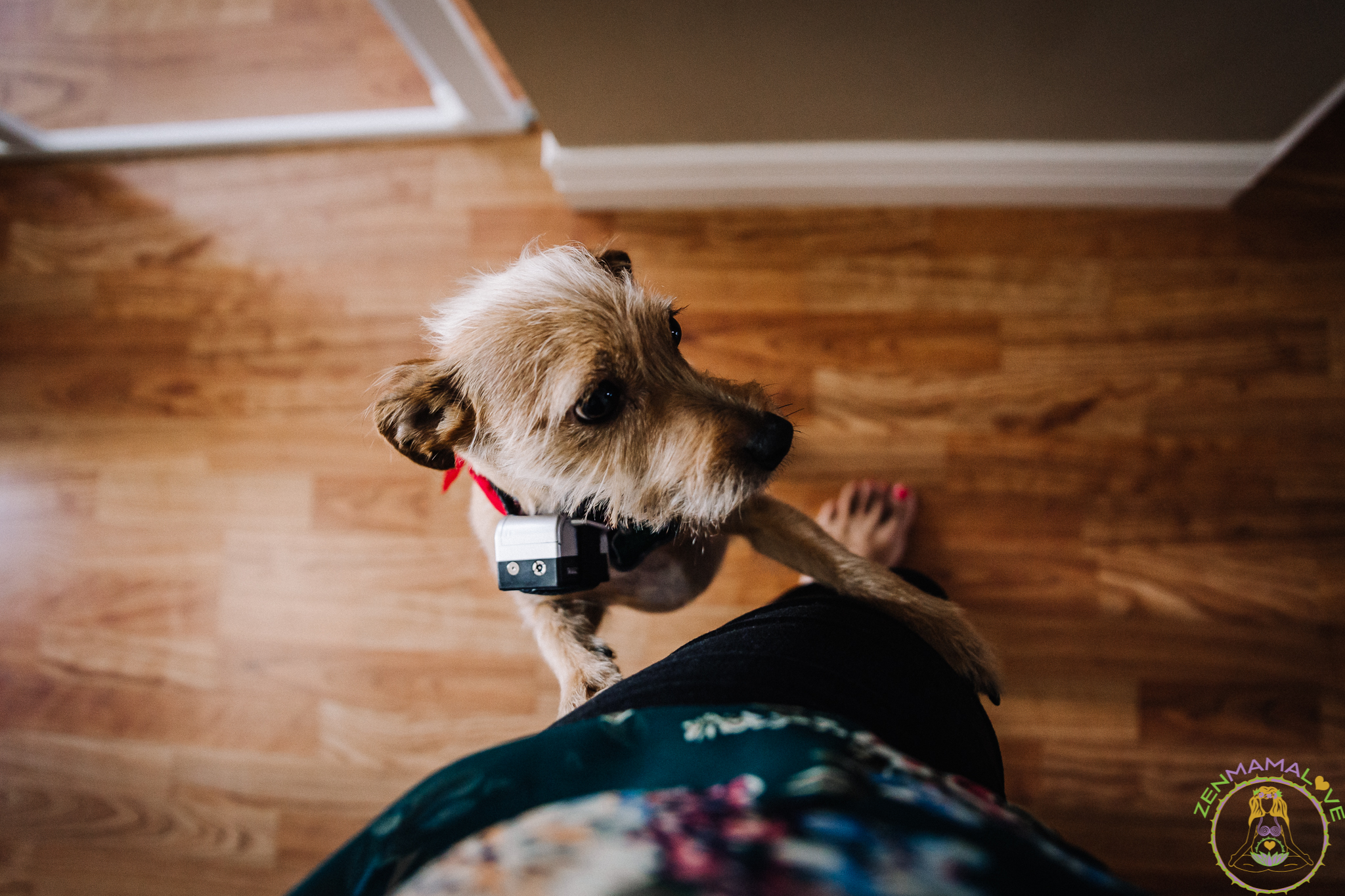 dogs checks out doula