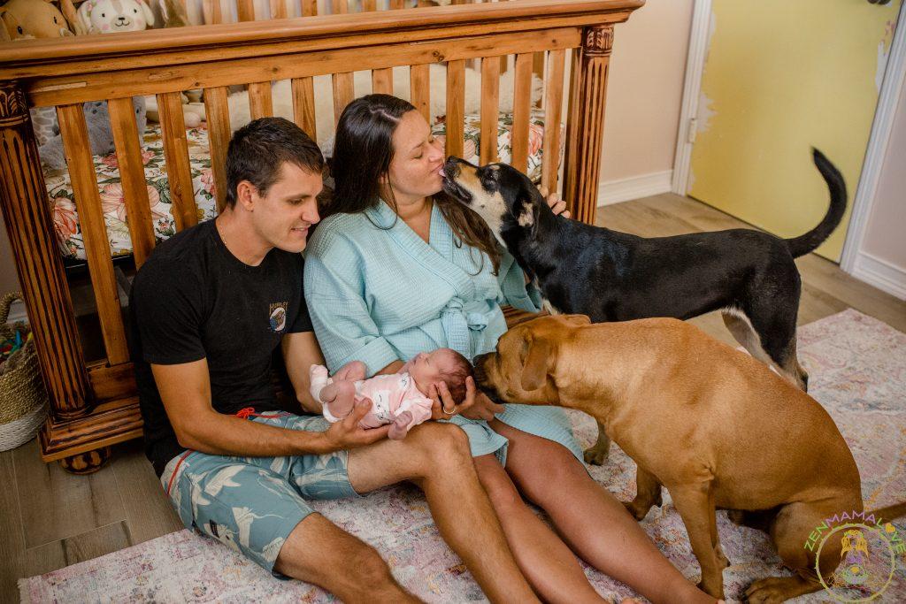 dogs newborns postpartum